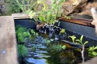 Solar Nature Pond